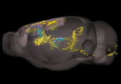 A Comprehensive Center for Mouse Brain Cell Atlas